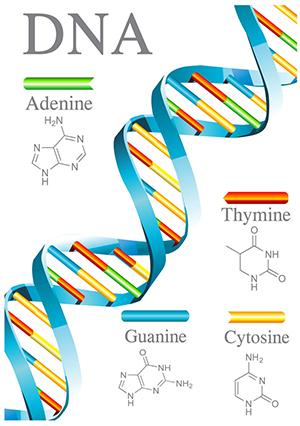 DNA类.jpg